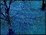 Autumn Tree in Blue, Green, and Purple 額入りキャンバスプリント : ロバート・カッタン