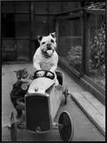 Dog and Cat Car Framed Canvas Print