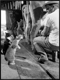 Cats Blackie and Brownie Catching Squirts of Milk During Milking at Arch Badertscher's Dairy Farm Framed Canvas Print by Nat Farbman