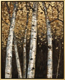 Shimmering Birches 2 Framed Canvas Print by Arnie Fisk