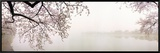 Cherry Blossoms at the Lakeside, Washington DC, USA Framed Canvas Print by  Panoramic Images
