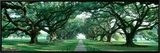 Louisiana, New Orleans, Brick Path Through Alley of Oak Trees Framed Canvas Print by  Panoramic Images