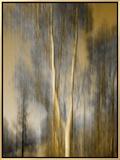 Composited Image of Trees 額入りキャンバスプリント : ダイアン・ミラー