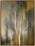 Composited Image of Trees Framed Canvas Print by Diane Miller