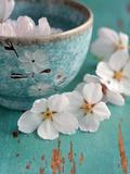 Fleurs de Cerisiers Prints by  Fox