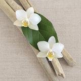 Orchidee und Holz Poster von  Chatelain