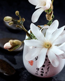 Composition Zen : Magnolia Stella Prints by  Beyler