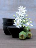Composition Zen : Coupes Fleurs d' Art by  Beyler