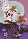 Composition Zen : Branche de Prunus Art by  Beyler