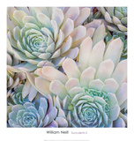 Succulents II Posters by William Neill