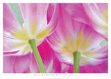 Tulip Garden Posters by Phil Gleissner