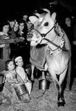 Elsie the Cow 1947 Archival Photo Poster Posters