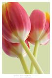 Blüte Kunst von Phil Gleissner