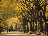 Central Park, New York City, Ny, USA Kunst auf Metall von Walter Bibikow
