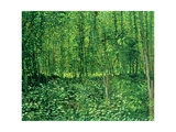Woods and Undergrowth, c.1887 Metal Print by Vincent van Gogh