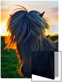 The Horse of Sagas Metal Print by Trey Ratcliff