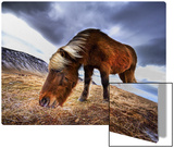 An Icelandic Horse in the Wild Metal Print by Trey Ratcliff