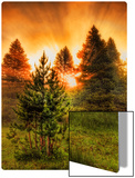 The Morning Steam Through the Forest in Yellowstone Metal Print by Trey Ratcliff