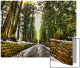Old Forest After the Snowmelt Metal Print by Trey Ratcliff