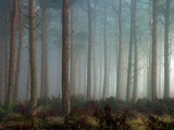 Forest of Pine Metal Print by Malcolm McBeath