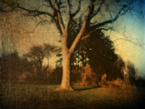 Memories of a Tree Metal Print by Robert Cattan
