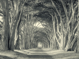 Cypress Tree Road, Point Reyes Metal Print by Vincent James