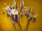 Iris Metal Print by Irene Suchocki