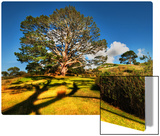 Bilbo's Hobbit Hole and the Party Tree in the Shire Metal Print by Trey Ratcliff