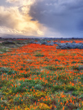 Frühlingssturm Alu-Dibond von Vincent James