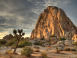 Sunset at Joshua Tree National Park in Southern California Metal Print by Kyle Hammons