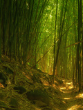 Bamboo Forest, Maui Metal Print by Vincent James