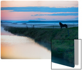 The Silent Horse in the Fog Metal Print by Trey Ratcliff
