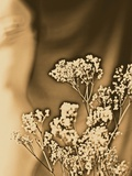 Sepia Coloured Flowers Metal Print by India Hobson