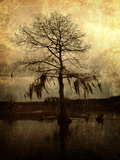 Cypress Metal Print by Lydia Marano