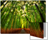 The Bamboo Forest Metal Print by Trey Ratcliff
