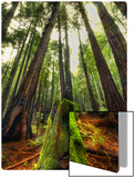 The Giants in the Muir Woods Metal Print by Trey Ratcliff