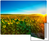 Sunflowers at Sunset Metal Print by Trey Ratcliff