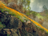 Spring in the Canyon Metal Print by Vincent James