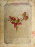 Rose Copie Metal Print by Nathalie Diacci