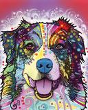 Australian Shepherd Poster by Dean Russo