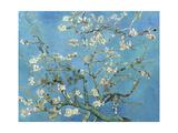 Blomstrende mandeltræ, Saint-Rémy, ca.1890 Premium Giclée-tryk af Vincent van Gogh