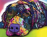 Savvy Labrador Prints by Dean Russo