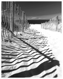 Shadowed Pathway - Poster