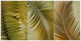 Palm Trio I Posters
