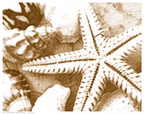 Starfish Impression Posters