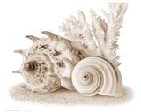 Seashells I Affiches