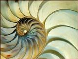 Close-up of Nautilus Shell Spirals Gerahmter Fotografie-Druck von Ellen Kamp