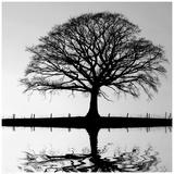 Shimmering Oak Reprodukcje