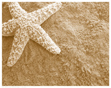 Starfish in the Sand Art