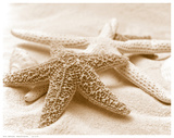 Starfish Family Posters